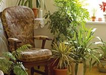 biljke-koje-osvezavaju-vazduh