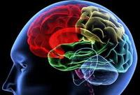 Mozak_i_treniranje