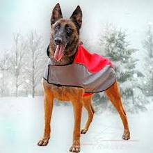 kako-psi-izdrze-zimu