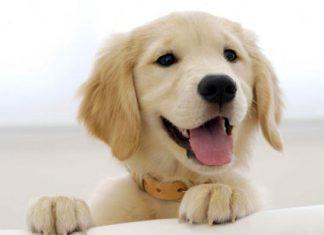 Strah-stres-depresija kod pasa